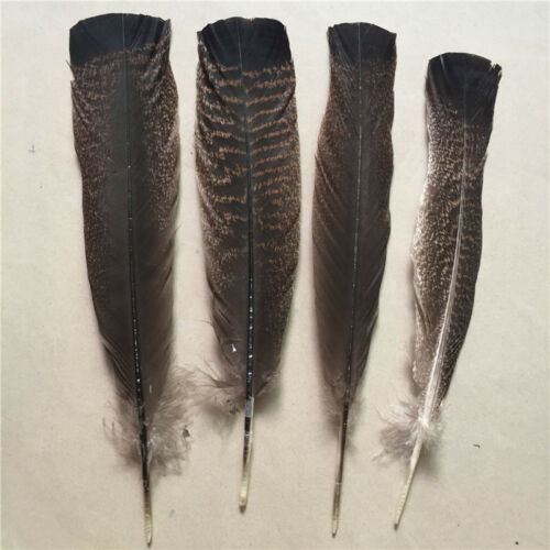 25-30cm 10-100pcs high quality precious wild turkey tail feather 10-12 inches