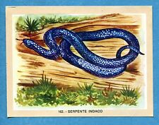 NATURAMA - Lampo 1968 - Figurina-Sticker n. 162 - SERPENTE INDACO -Rec