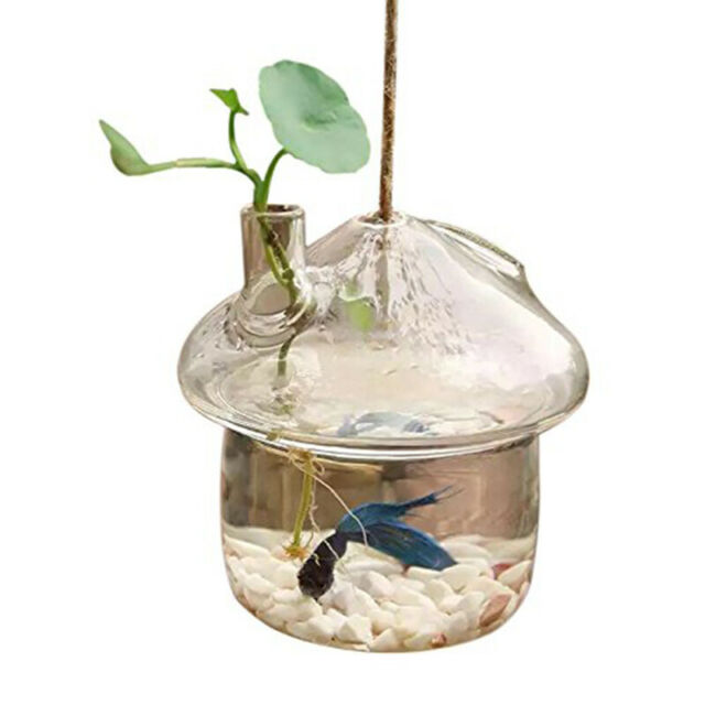Mushroom shaped Hanging Glass Planter Vase Rumble Fish Tank Terrarium S4F5