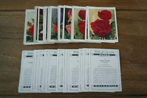 Wills-Roses-Cards-From-1936-Large-VGC-Pick-amp-Choose-The-Cards-You-Need