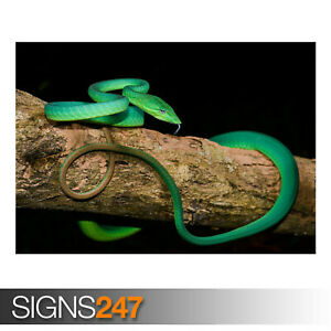 GREEN-ORIENTAL-WHIP-SNAKE-TREE-AE920-Photo-Picture-Poster-Print-Art-A0-to-A4
