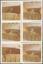 Lot of 6 Vintage Color Snapshot Photos Cute Pet Cat on Sofa Home Interior 690431