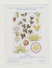 FICHE N°4  PLANTE MEDICINALE/COMITE INTERMINISTERIEL-BRYONE /Ed.Montaudon