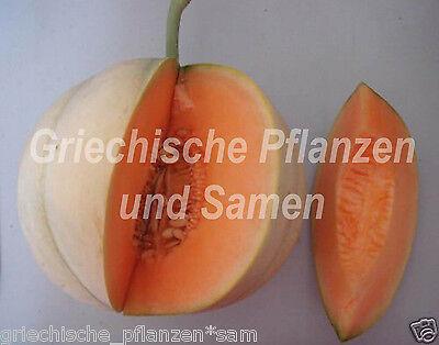 Melone Charantais 6 frische Samen  alte Sorte Frankreich reichtragend Obst