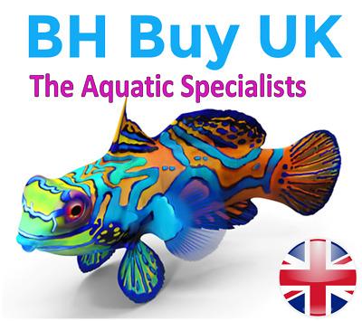 BH Buy UK