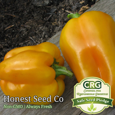 100 Heirloom Golden California Wonder Sweet Bell Pepper Seeds