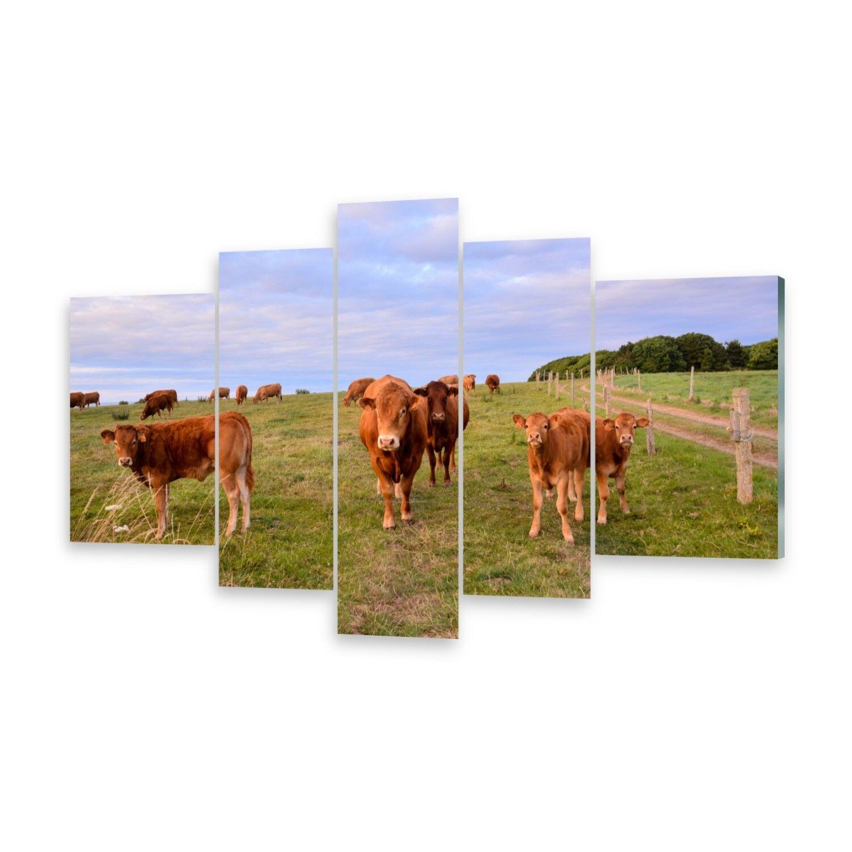 Mehrteilige Bilder Glasbilder Wandbild Kühe