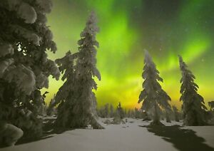 A1-Night-Forest-amp-Polar-Lights-Poster-Size-60-x-90cm-Nature-Poster-Gift-16672