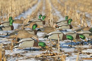 Greenhead-Gear-Over-Size-Mallard-Shell-Harvester-Pack-Duck-Decoys-Avery-w-Stakes