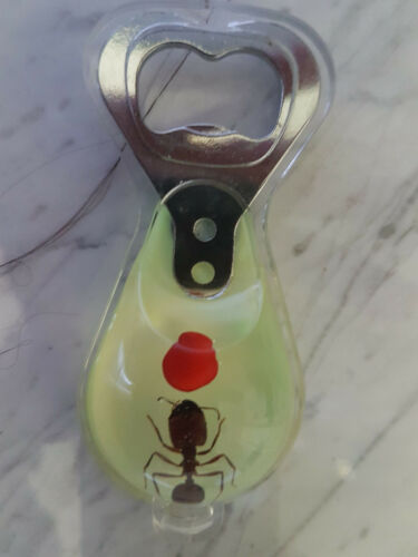 Echte Ameise I-ANT-010-B Ant Präparat in Kunstharz als Flaschenöffner
