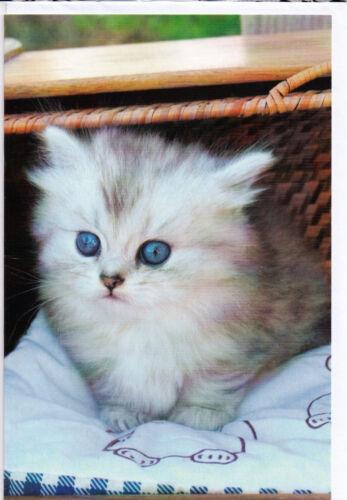 cat with blue eyes Klappkarte eine weiße Katze mit himmelblauen Augen