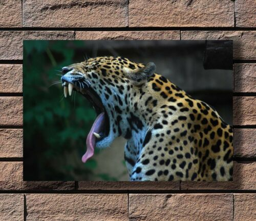 Leopard Yawning Africa Wild Animals Poster Fabric 8x12 20x30 24x36 E-695
