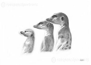 MEERKATS-3-Rare-Pencil-Drawing-Art-Print-Direct-only-100-made