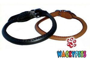 Quality-Rolled-Leather-Dog-Puppy-Collars-10-034-24-034-Neck-Size-Black-or-Brown