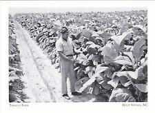 "*Postcard-""The Tobacco Farm"" -1960's-  -*Holly Springs, NC (#207)"