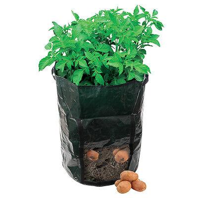 1 x Kartoffel-Pflanzsack für Balkon & Terasse, 360x510 mm