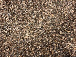 Buckwheat Hulls 100 Organic Usa Grown Buckwheat Great