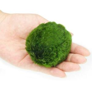 4cm-Giant-Marimo-Moss-Ball-Cladophora-Live-Aquarium-Plant-Fish-Aquariums-Decor