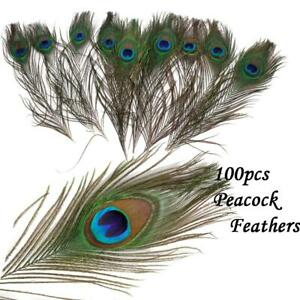 Strung 20cm long Natural Green Peacock Feathers Price per 10cm Craft Fly Fishing