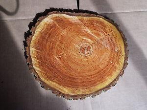 Holzscheibe 10 Baumscheiben Esche Baumscheibe 20 x 2 cm