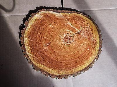 20x2-3 cm Esche Baumscheibe Holzscheibe 5 Baumscheiben