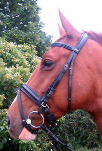 FSS-English-Silver-Buckle-Comfort-Padded-Poll-Crown-CRANK-FLASH-Combined-Bridle