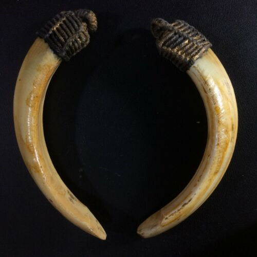 Thai Amulet Real 2 Wild BOAR Teeth Pig Pendant Power Fang Tooth Charm Blessed