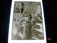 Unique Antique Glass Photo Negative, Cat Sitting On Wood Chopping Block
