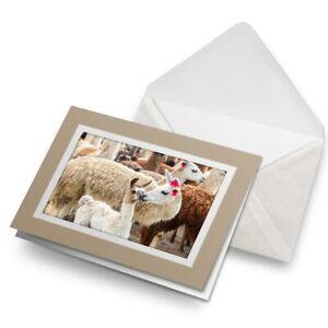 Greetings-Card-Biege-Llama-Family-Mum-amp-Baby-Alpaca-Herd-16774