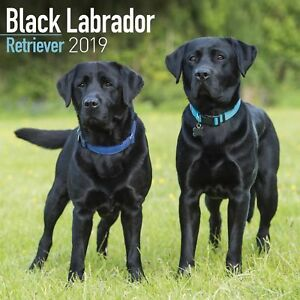2019-BLACK-LABRADOR-RETRIEVER-CALENDER-BY-AVONSIDE-CALENDARS