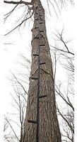 Tree Stand 25' Climbing Sticks Hunting Ladder Deer