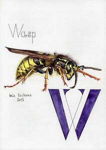 Wasp-ABC-series-original-Gala-Kostroma-watercolor-alphabet-insect-painting-art