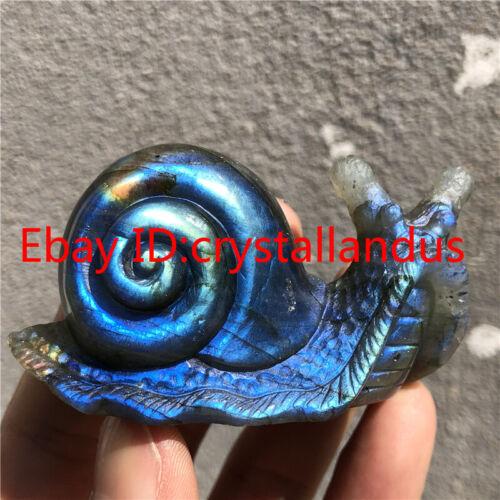 2.6 inch Natural Quartz Crystal skull Carved Labradorite Snail Gemstone healing