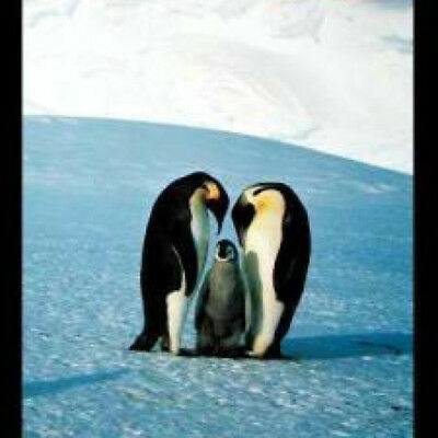Bildung Penguins Pinguine Poster Druck Größe 61x91,5 cm Educational
