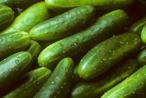 Garden Sweet Cucumber Seeds, BURPLESS, Organic, NON-GMO, FREE SHIPPING