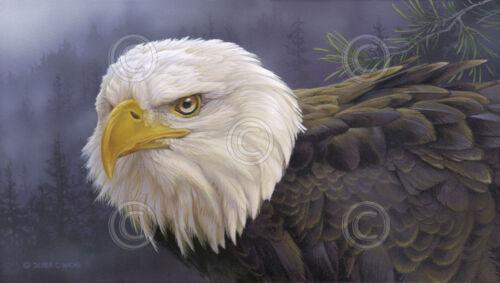 Shrouded Perch by Derek Wicks Art Print Poster Bald Eagle Wildlife Bird 19x13