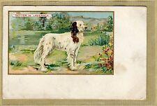 Cpa Pub Chromo Setter de Laverack Chien Chasse Hunting Dog Jagdhund wn078