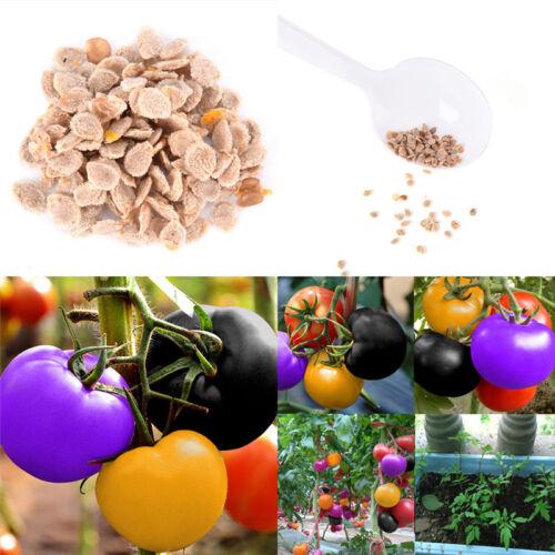 100X Rainbow Tomato Seeds Colors Bonsai Organic Vegetables Seed Home GardenYT