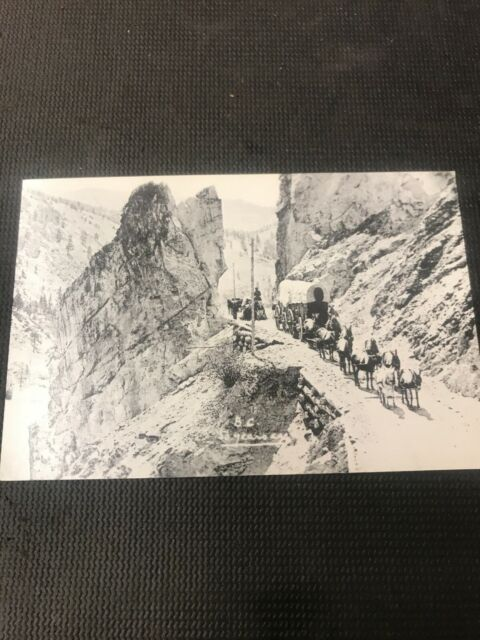 real photo postcard Wagons North B.C. Caravan Horses Pioneer Card Repro  I01