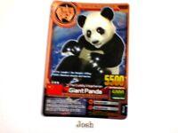 Animal Kaiser Evolution Evo Version Ver 7 Bronze Card (A011: Giant Panda)