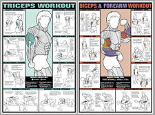 ARM WORKOUT FREE WEIGHTS EXERCISES WALL CHARTS Professional Fitness 2 Poster Set