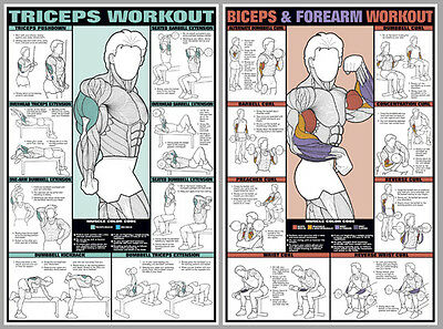 arm workout free weights exercises wall charts