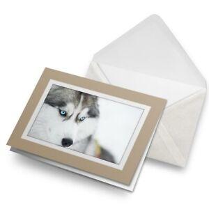 Greetings-Card-Biege-Siberian-Husky-Dog-Blue-Eyes-2697