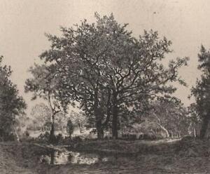 Theodore-Rousseau-Mare-et-chenes-Eau-Forte-ancienne-Boilvin-XIXe