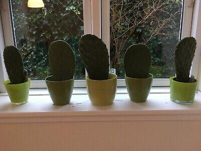 køb kaktus århus