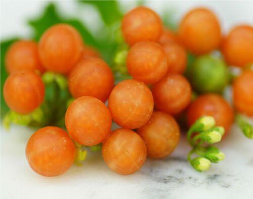 Seeds Solanum Sweet Edible Berry Rare Yummy Easy Grow