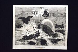 Caccia-alla-balena-Incisione-del-1868