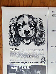 1950-Sergeant-039-s-Dog-Care-Ad-Brittany-Spaniel-Dog