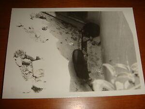 Singapore-1974-View-of-Bears-inside-Singapore-Zoo-Black-amp-White-Photograph