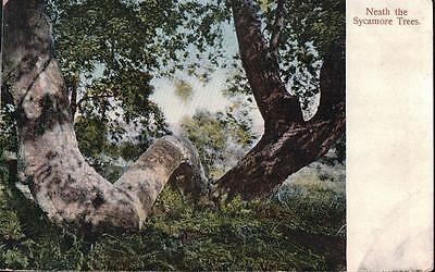 "VINTAGE PHOTO POSTCARD ""NEATH THE SYCAMORE TREES"" CALIFORNIA LOCATION REIDER PUB"